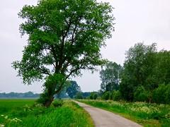 Hooibroeksteeg in Elshout . (Franc Le Blanc .) Tags: nature landscape lumix spring panasonic lente fluitekruid elshout hooibroeksteeg