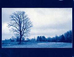 Cyanotype: Rocky Fork Metro Park (Stephen A. Wolfe) Tags: winter ohio tree landscape westerville cyanotype nikonfm3a swolfe2000 adobelightroomcc httpstephenwolfephotography rockyforkmetropark