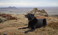 4mai_Thorbjorn_078 (Stefn H. Kristinsson) Tags: dog mountain dogs iceland spring hiking may ma vor hundur sland ganga fjallganga tamron2875mm grindavk hundar grindavik orbjrn nikond800 thornbjorn orbjarnarfell
