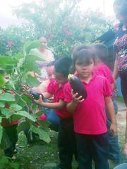 IMG-20160505-05724 (dernst) Tags: jardin huevos cosecha gallinas preescolar