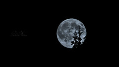 My moon rise (LuciMilas) Tags: moon night nightscape alien craters nightlight moonlight tamron et