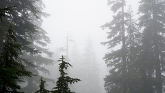 A foggy hike on Mount Seymour (planted city) Tags: trees canada mountains nature fog vancouver clouds forest hiking britishcolumbia hike coastal northshore northvancouver pnw mountseymour coastmountains vitaminn