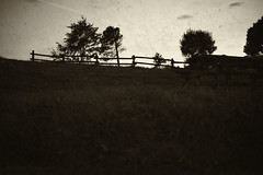 (Ivana Murace) Tags: trees blackandwhite italy trekking liguria ngc dream dreams monocrome