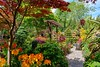 A visit to Britain's best back garden (neilsimpson515) Tags: nikon walsall fourseasonsgarden nikon2470 nikond800e