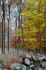Stone wall in autumn (fabiankoppers) Tags: wood old autumn trees sky mist colour tree green fall abandoned nature colors beautiful grass leaves yellow misty stone wall composition contrast landscape concrete countryside woods sweden stones horizon meadow retro blade beech fallmist