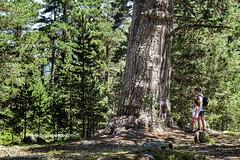 Abuelos del Bosque (Historia de Covaleda) Tags: duero urbion covaleda