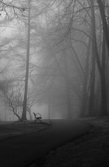 Untitled 42 (Takako Kitamura) Tags: bw fog bench blackwhite outdoor