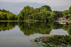 Reflections (Infomastern) Tags: berlin germany garden deutschland pond waterlily damm tyskland gardensoftheworld trdgrd nckros grtenderwelt dererholungsparkmarzahn