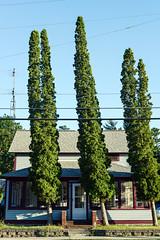 Glen Arbor (pantagrapher) Tags: glen arbor michigan northern sleeping bear dunes trees house nikon d600