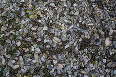 Stoney (jonsomersphotos) Tags: stones pebbles riverbed shale lookingdown