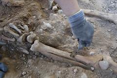 Exhumación cementerio civil Ponferrada (13)