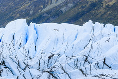 Matanuska Close Up (Alfred J. Lockwood Photography) Tags: alfredjlockwood nature landscape glacier matanuskaglacier summer morning overcast texture alaska ice terminus