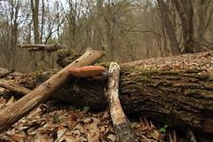 Mtraverebly-Szentkt Nemzeti Kegyhely (bencze82) Tags: canon eos 700d magyarorszg hungary mtra mtravereblyszentkt nemzeti kegyhely erd forest wood woods termszet nature spring tavasz voigtlnder colorskopar slii 20 mm f35