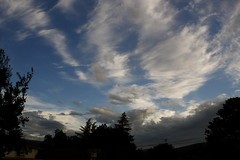 (melissa.dehoog) Tags: rain city sanjose california reflective longexposure lights buildings trees street sunset outdoor telephonewires bayarea