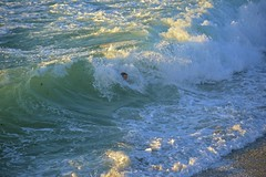 _DSC0273 (Juliana Beletsis) Tags: california water waves lajolla pacificocean southerncalifornia skimboarding sanddiego wipeoutbeach