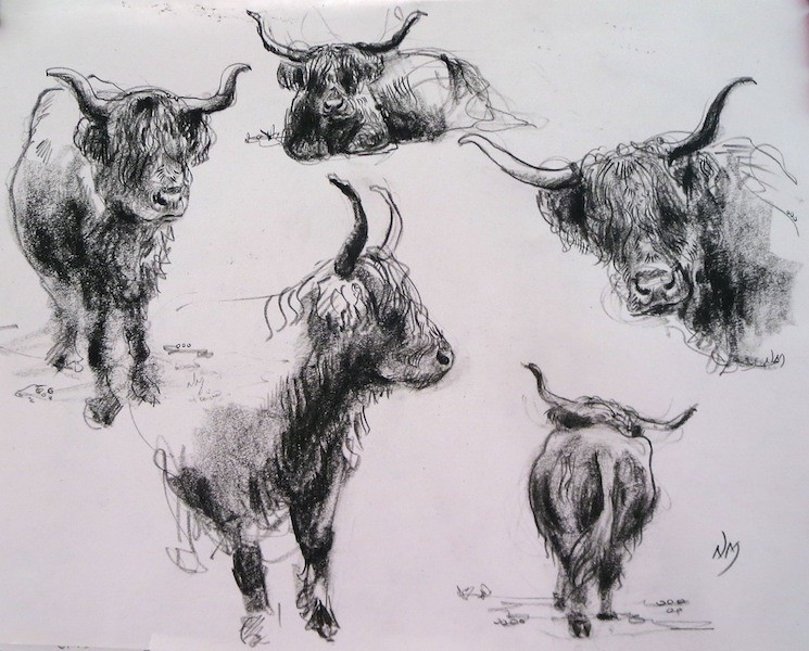 The World S Most Recently Posted Photos Of Cattle And Sketch