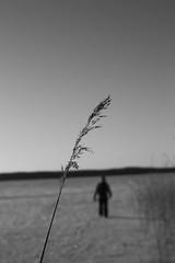 She Is Gone (hujanen53) Tags: winter blackandwhite bw canon suomi finland scandinavia talvi mustavalko lappeenranta skandinavia mustavalkoinen canonef35mmf20 canoneos450d