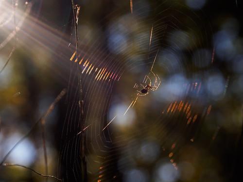 Spiderbeam!