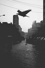 Morning flight. (ws_photography) Tags: street morning travel monochrome flight explore bazaar kolkata
