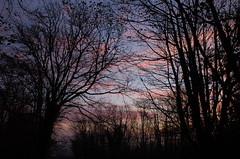 A morning sky through trees (series) (Kirkleyjohn) Tags: morning trees sunrise dawn treesilhouette morninglight daybreak treessilhouettes