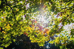 Autumn 2014 (sxdlxs) Tags: autumn light shadow sun color colour tree fall mushroom colors leaves animal mushrooms cow leaf colorful colours bokeh laub flare sonne sunflare 2014