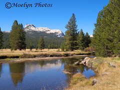 Catherdral Peak-Tuolumne River-Hike to Soda Springs-Tioga Road-Yosemite National Park (16) (moelynphotos) Tags: california mountain reflection landscape scenery yosemitenationalpark nationalparks tuolumnemeadows easternsierras sierranevadarange tuolumneriver catherdralpeak tuolmnemeadows moelynphotos