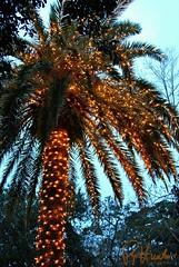Christmas Palmetto (Ronald Hunter Photos) Tags: christmas sc lights southcarolina charleston palmetto lowcountry