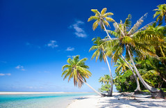 Beach (tigercop2k3) Tags: tree beach paradise coconut tropical outstanding
