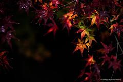 No Photo, No Life... #12 (Shingo.F) Tags: zeiss nikon autumncolors 2100 makroplanar d810 zf2