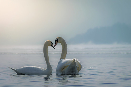 Love by Ole Petter Rust Photography, on Flickr