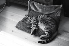 cat (Teun Donders) Tags: white black film cat 35mm kat zwart wit praktica poes 2014 donders mtl3