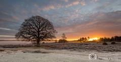 Sunbursts & Mist - New Forest - Explored 30/12/14 (Christopher Pope Photography) Tags: co countryside fog freeze frost hampshire mist newforest singletree sky sun sunburts sunburst sunrise trees 2014 web