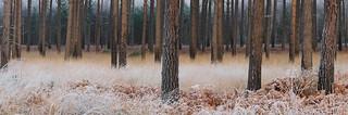 Crowthorne Wood Panorama [Explored]