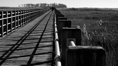 Crossing the Salt Marsh (Violet aka vbd) Tags: park blackandwhite bw is pentax connecticut newengland ct monotone milford saltmarsh k3 2014 explored silversandsstatepark vbd smcpentaxda55300mmf458ed winter2014