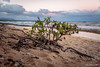 Kauai Beach.jpg (JohnWill1970) Tags: ocean usa beach hawaii kauai kauaibeach