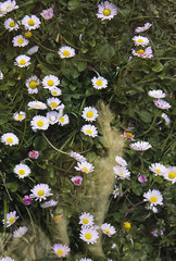 m16-4a ed (I'N,I) Tags: flowers cat garden spring colorful diary 28mm ct ini double hidden combine agfa bergamo catchy pigna pairing doppiaesposizione precisa flickrfriday pigno nikkorpc pignobg
