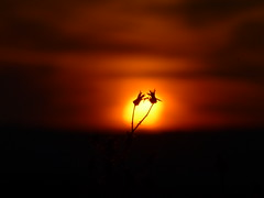 Together (sunset1uk) Tags: sunset sky italy sicily autofocus