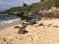 IMG_0284 (Ourisman Travel) Tags: hawaii maui wailea hotelwailea