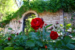 The gate of the soul is always open for a rose (Radu Andrei B) Tags: gardens bulgaria balchik