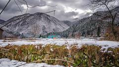Takayama fields of snow (hippo350) Tags: japan tokyo takayama gifu