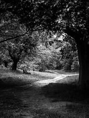 Path (Richard Brown 56) Tags: omd em5