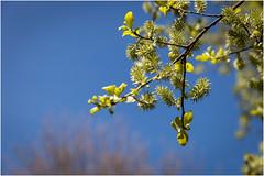 Spring . (:: Blende 22 ::) Tags: flower germany landscape deutschland spring hessen blossom landschaft springtime frhling hesse blten canoneos5dmarkii ef2470f28liiusm