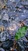W A V E L E T ~ Wallpaper XIII (Sandipa Malakar (bristii)) Tags: wallpaper green texture stone leaf stream waterfalls ripples rectangular waterart wavelet mobilephotography sandipamalakar sandipamalakarcom