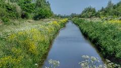 De wieden ..Natuurgebied (Truus) Tags: natuur weerribben gebied