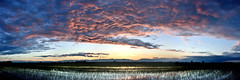 Wide sunset () Tags: sunset sky panorama cloud colors field clouds landscape twilight tramonto nuvole rice pano country campagna cielo fields colori paesaggio crepuscolo pianura risaia risaie vercellese