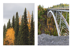 Alaska | Four (pyrite_gold) Tags: road trip bridge autumn trees winter nature yellow alaska america