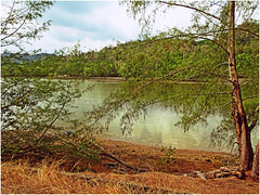 Mangrove Forest Landscape (WiLL CWK) Tags: travel trees nature forest river landscape photography woods scenic mangrove malaysia waters langkawi geopark