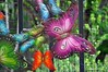 Butterflies On The Fence (Trish Mayo) Tags: fence garden harlem butterflies communitygarden thebestofday gününeniyisi