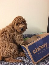 Rhody is Maggie and Chewy's boy!
