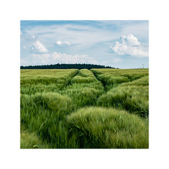20160608-DIRK8795klein (pesce4221) Tags: landscape natur feld wolken landschaft quadrat getreide 33mm x100s
